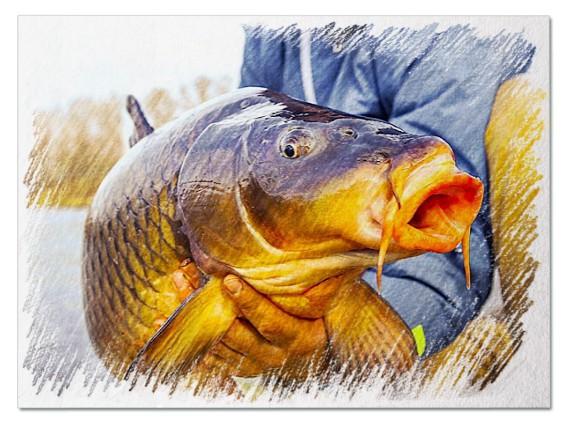 Большая рыба во сне