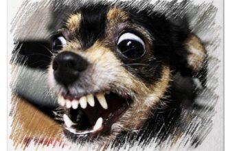 Злая собака во сне