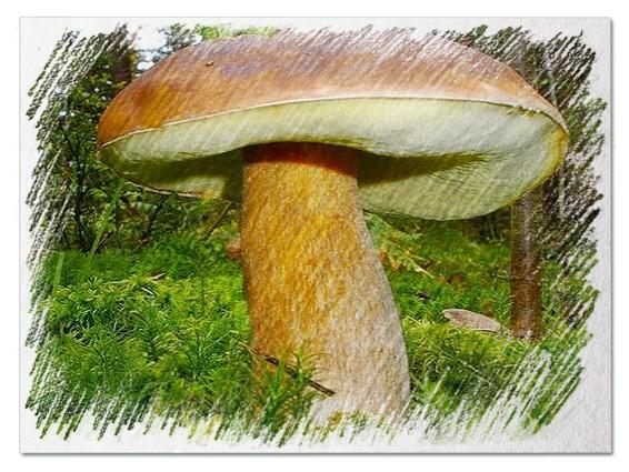 Большие грибы во сне
