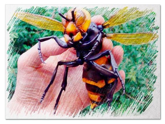 Большие насекомые во сне