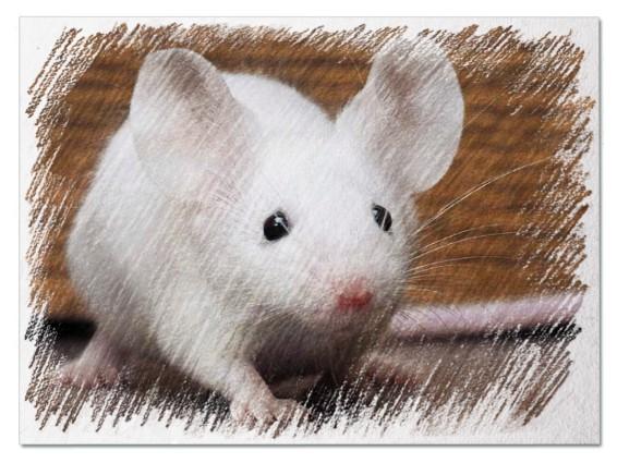 Белая мышь во сне
