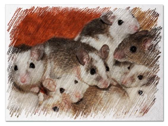 Много мышей во сне