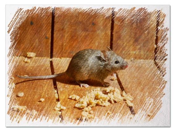 Мышь в доме во сне