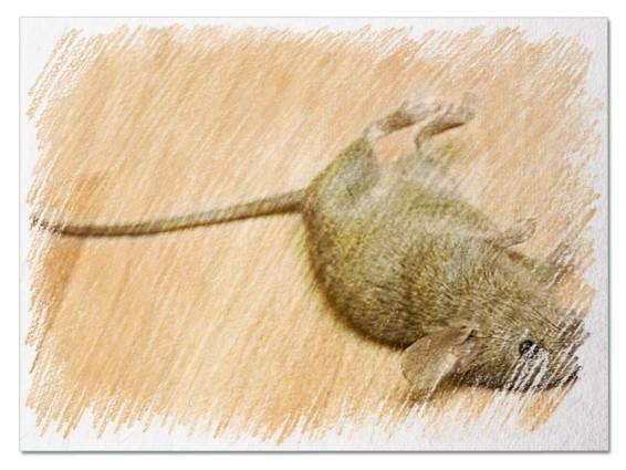 Убитая мышь во сне
