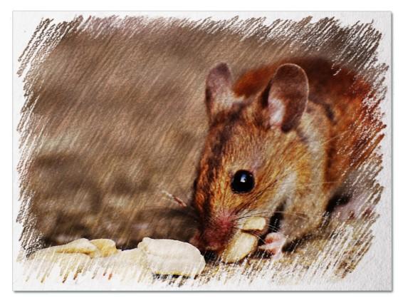 Живая мышь во сне