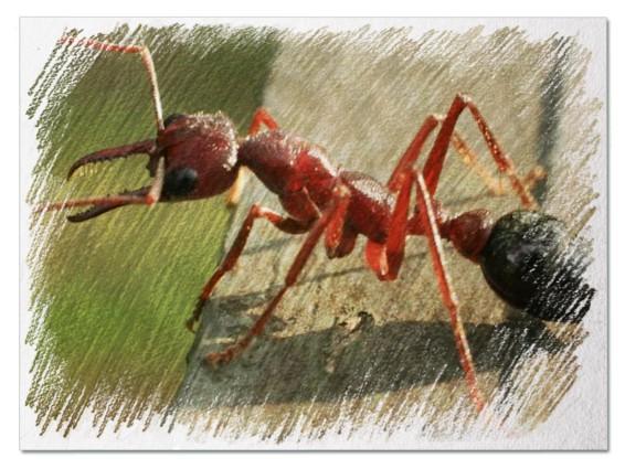 Большой муравей во сне