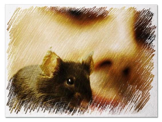 Мыши для мужчины во сне