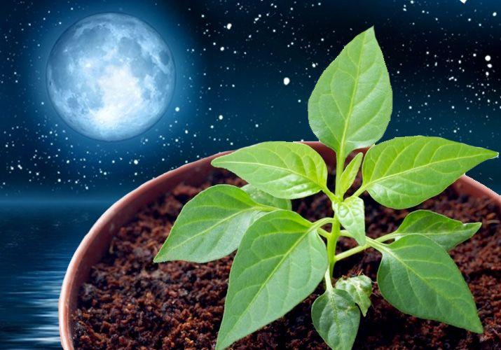 лунный посевной календарь для Урала