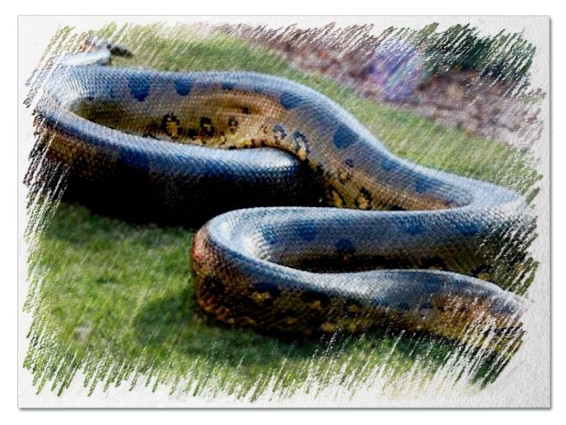 Большая змея во сне