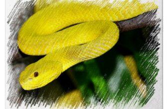 Желтая змея во сне
