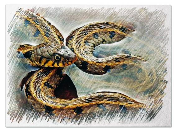 Змея в воде во сне